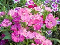 The flower bloom in spring