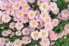 Flower blooming background wallpaper stock image