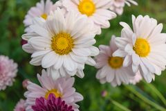 Flower blooming background wallpaper stock images