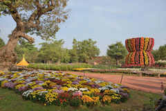 Flower blooming at Chiangrai Asian Flower festival 2012. Royalty Free Stock Photography
