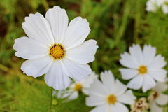 Flower Blooming. Flower in the garden are blooming Stock Image