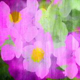Flower blooming painting Stock Photography