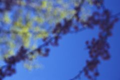 Flower blooms on blue sky. Out of focus flowers on blue sky Stock Image