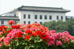 Flower blossom. In front of city building Stock Photos