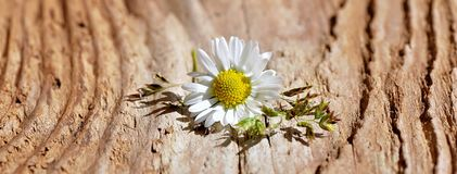 Flower, Blossom, Bloom, White Royalty Free Stock Images