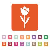 The flower, blossom icon. Plant and garden symbol. Flat Stock Photography