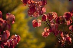 Flower, Blossom, Leaf, Branch royalty free stock photo