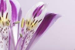 Flower blossom. Macro shot flower blossom. Flower background Stock Photos