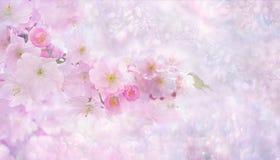 Flower, Blossom, Pink, Cherry Blossom royalty free stock photos