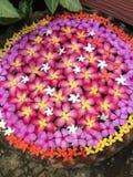 Flower blossom. Pink flower blossom flotation in water stock image