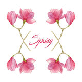 Flower blossom spring illustration with magnolia branches in watercolor. elements for season design. Stock Images
