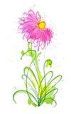 Flower of blots 1 Stock Photos