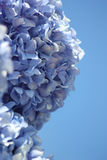 Flower blue. Blue flower against a blue sky Royalty Free Stock Image
