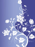 Flower in blue background Stock Photos