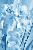 Flower in blue color Stock Photo