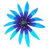 Flower blue cyan black rudbeckia isolated on a white background. Close-up. Element of design royalty free stock photos