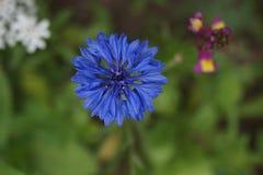Flower, Blue, Flora, Purple stock image
