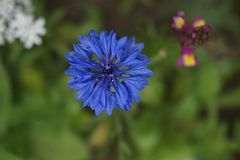 Flower, Blue, Flora, Purple royalty free stock images