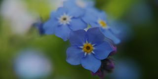 Flower of blue stock image