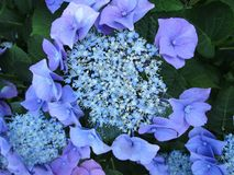 Flower, Blue, Plant, Flowering Plant stock photo
