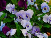 Flower, Blue, Plant, Flowering Plant stock photography