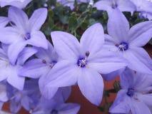 Flower, Blue, Plant, Flowering Plant royalty free stock photos