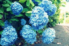 Flower, Blue, Plant, Flowering Plant royalty free stock photography