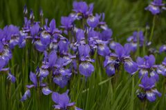 Flower, Blue, Plant, Flowering Plant