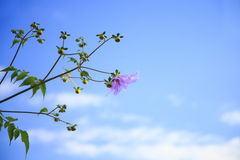 Flower with blue sky Stock Photo