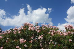 Flower. Blue sky and tropical flowers blooming Stock Photo