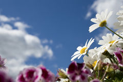Flower blue summer sky Royalty Free Stock Photo