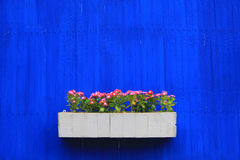 Flower on blue wall background Stock Images