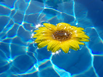 Flower on blue water Royalty Free Stock Photography