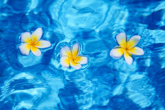 Flower in blue water Stock Photos