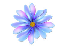 Flower. Blue flower on white background Royalty Free Stock Photo