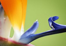 Flower, Blue, Yellow, Purple royalty free stock photography