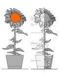 Flower blueprint. Technical blueprint of sunflower in a pot Stock Photos