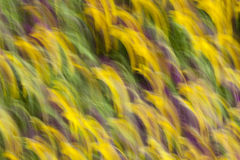 Flower blur Stock Photo