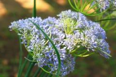 flower blur wallpaper Stock Image