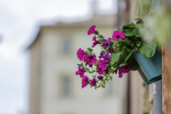 Flower with blurred houses Stock Images