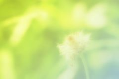 Flower. On blurry color background Stock Images