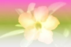 Flower. On blurry color background royalty free stock images
