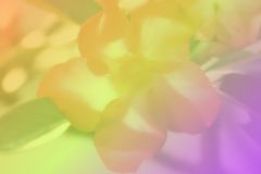 Flower. On blurry color background Royalty Free Stock Photography