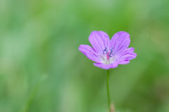 Flower on blurry grass Stock Images