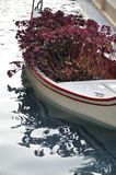 Flower in boat Stock Photography
