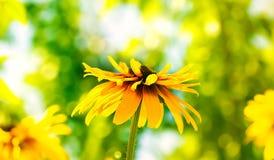 Flower boke Stock Photo
