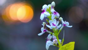 Flower bokeh against the sun light with panning shot moving stock video footage