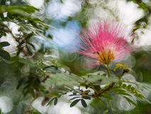 The flower on bokeh background Royalty Free Stock Image