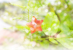 Flower and bokeh light with romantic feeling of winter and snow Stock Photo