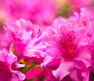 Flower bokeh picture Stock Images